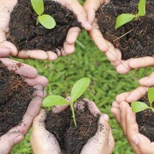 Terricci e fertilizzanti